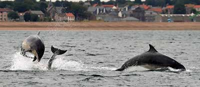 Dolphin watching cruises port macquarie