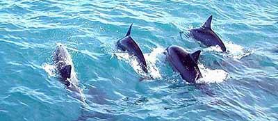 family dolphin spotting cruises port macquarie